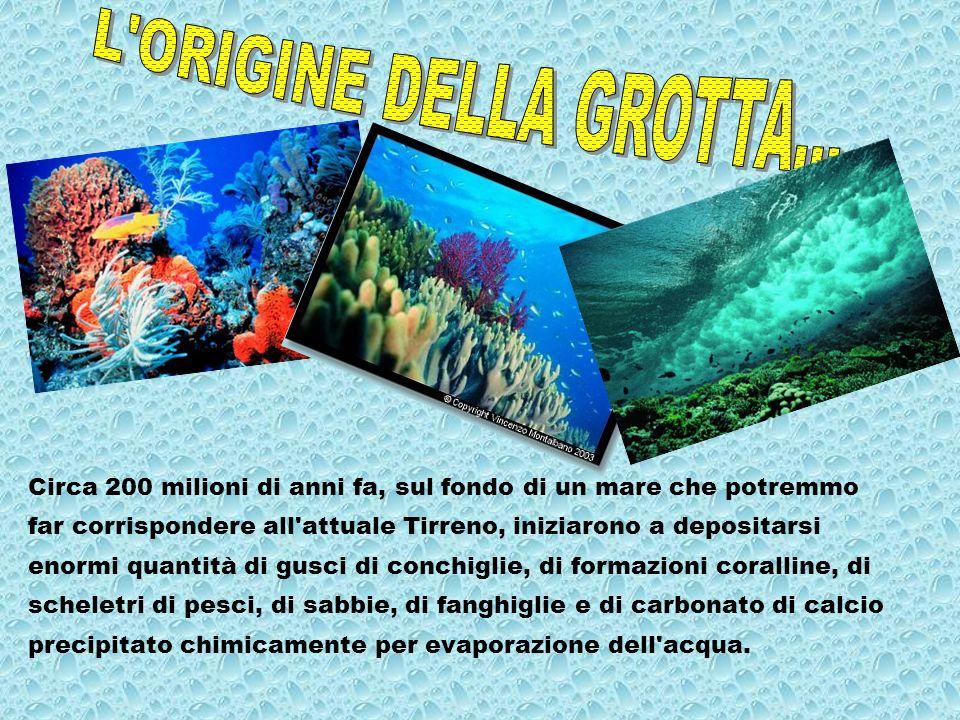 L ORIGINE DELLA GROTTA... Circa 200 milioni di anni fa, sul fondo di un mare che potremmo.