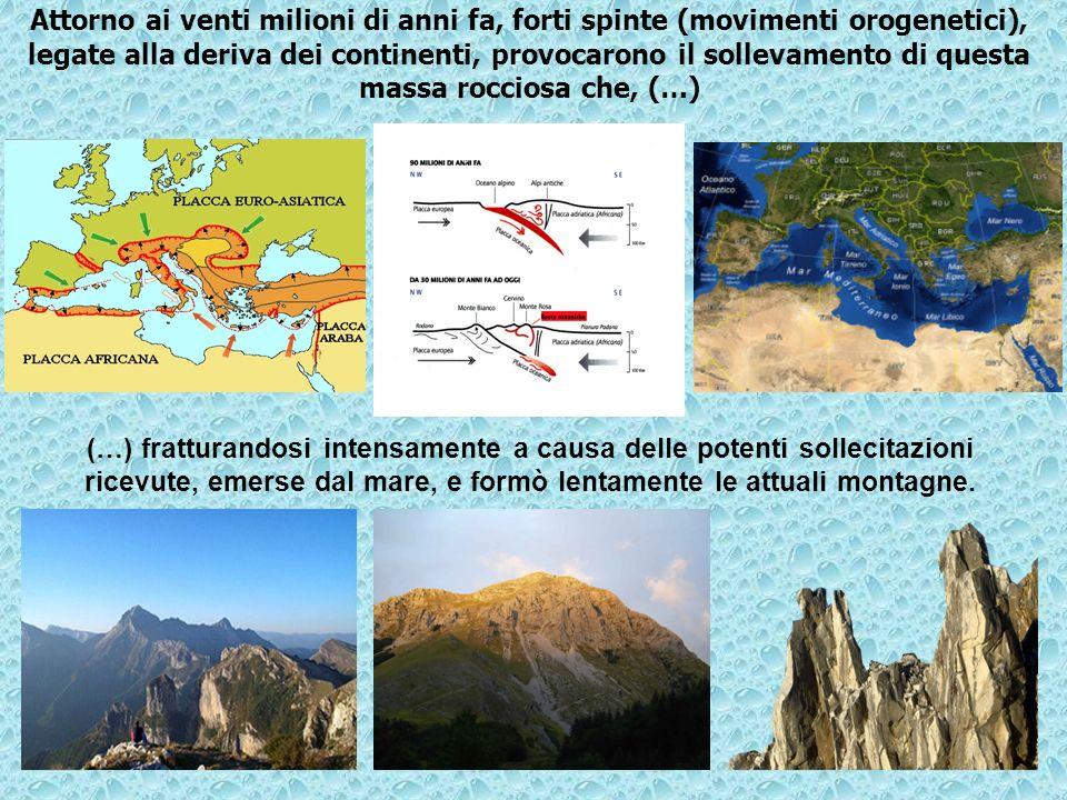 Attorno ai venti milioni di anni fa, forti spinte (movimenti orogenetici), legate alla deriva dei continenti, provocarono il sollevamento di questa massa rocciosa che, (…)