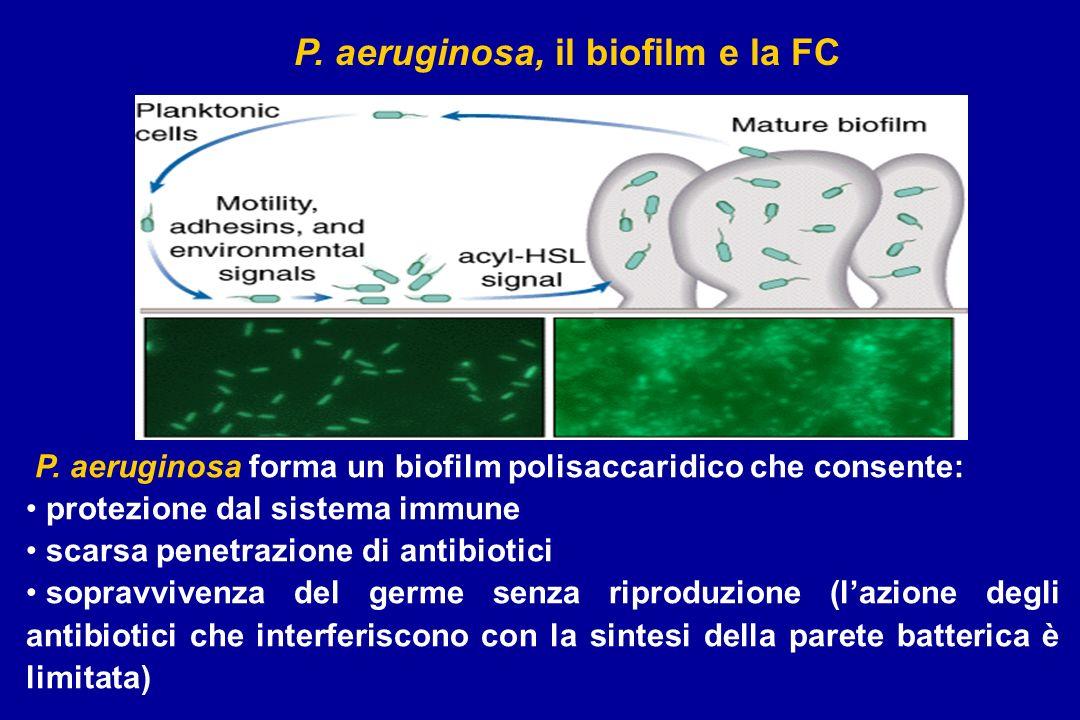 P. aeruginosa, il biofilm e la FC