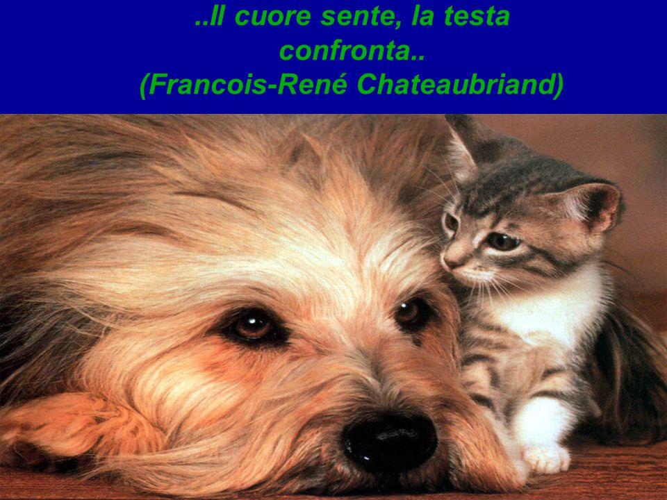 ..Il cuore sente, la testa confronta.. (Francois-René Chateaubriand)