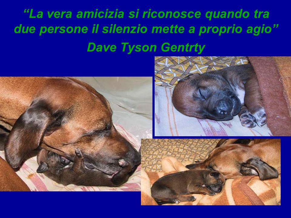 La vera amicizia si riconosce quando tra due persone il silenzio mette a proprio agio Dave Tyson Gentrty