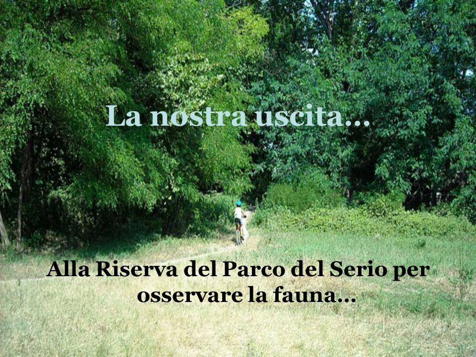 Alla Riserva del Parco del Serio per osservare la fauna…