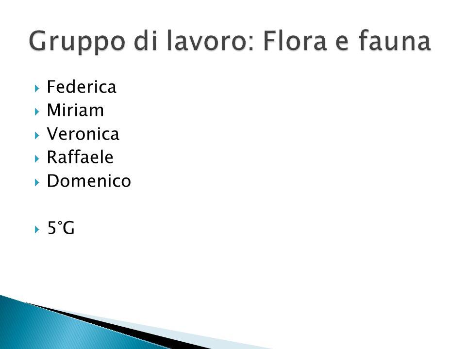 Gruppo di lavoro: Flora e fauna