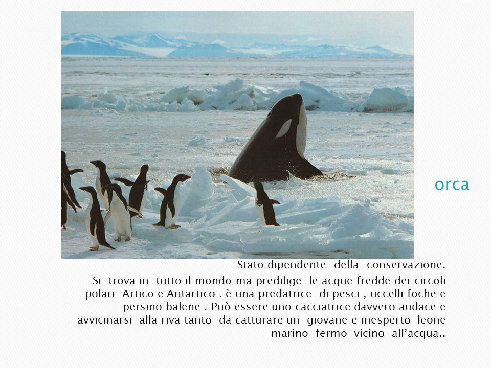 orca Stato:dipendente della conservazione.