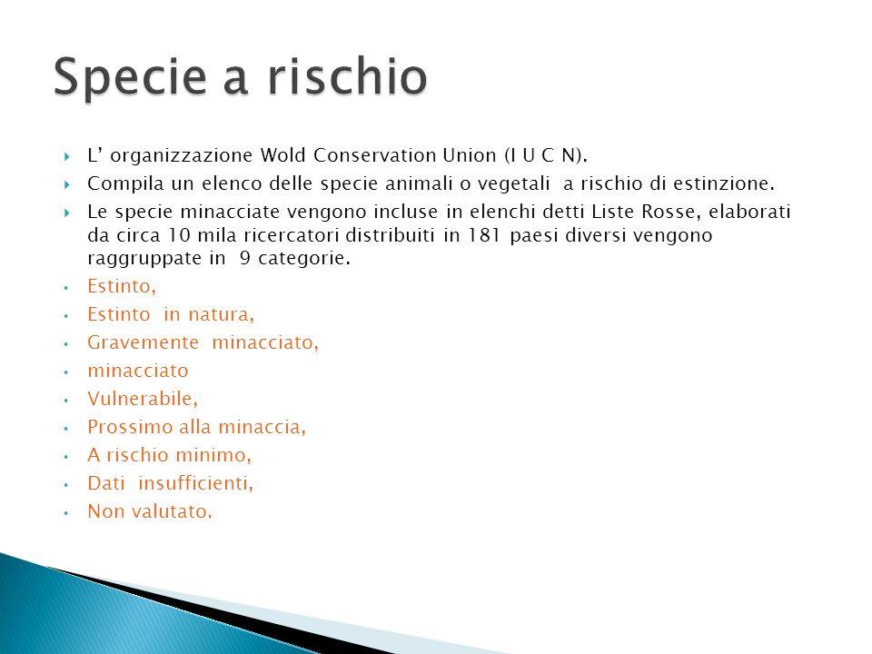 Specie a rischio L' organizzazione Wold Conservation Union (I U C N).