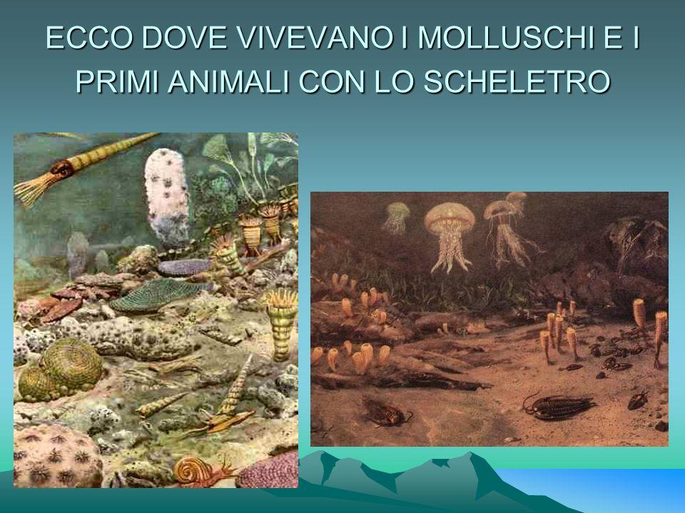 ECCO DOVE VIVEVANO I MOLLUSCHI E I PRIMI ANIMALI CON LO SCHELETRO