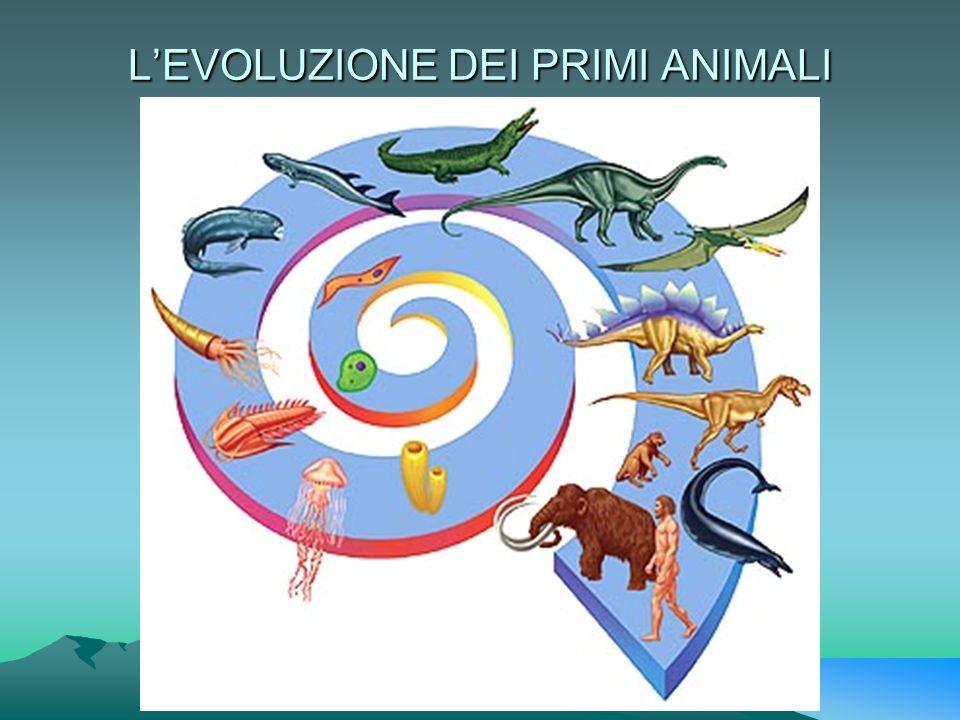 L'EVOLUZIONE DEI PRIMI ANIMALI