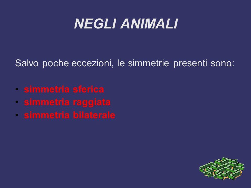 NEGLI ANIMALI Salvo poche eccezioni, le simmetrie presenti sono: