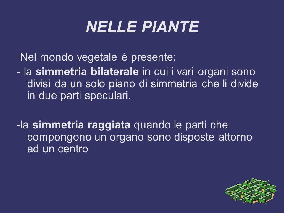 NELLE PIANTE Nel mondo vegetale è presente: