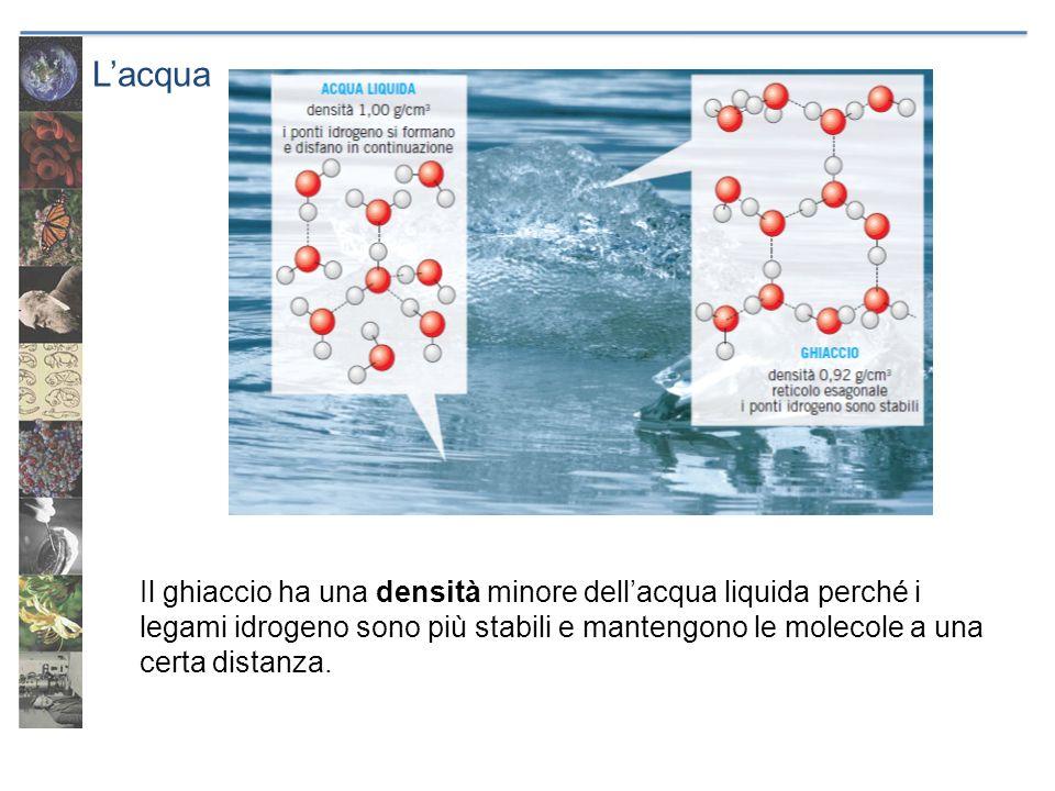 L'acqua Il ghiaccio ha una densità minore dell'acqua liquida perché i legami idrogeno sono più stabili e mantengono le molecole a una certa distanza.