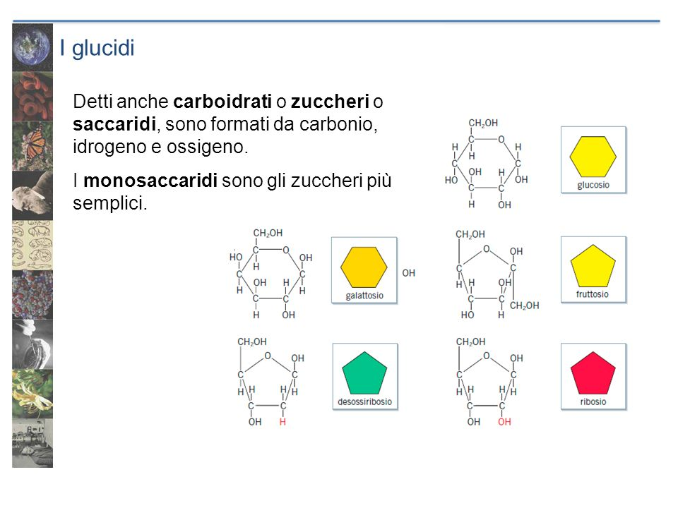 I glucidi Detti anche carboidrati o zuccheri o saccaridi, sono formati da carbonio, idrogeno e ossigeno.