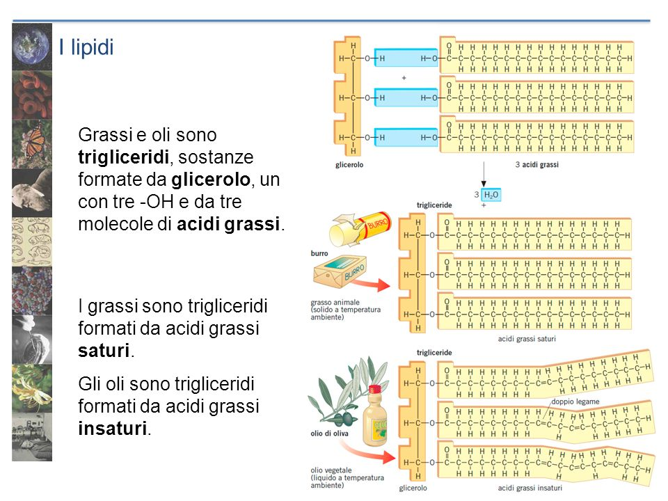 I lipidi Grassi e oli sono trigliceridi, sostanze formate da glicerolo, un con tre -OH e da tre molecole di acidi grassi.