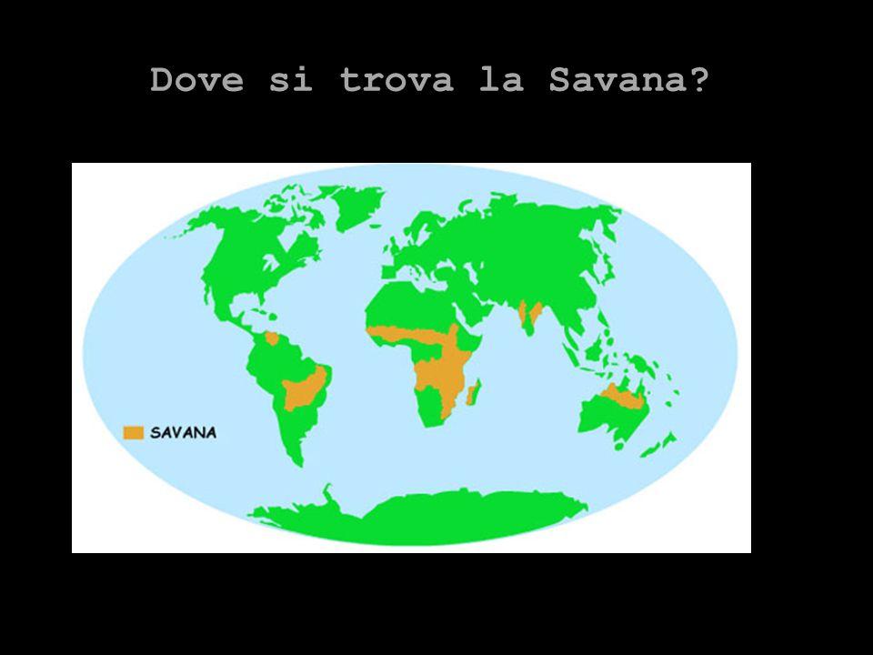 Dove si trova la Savana