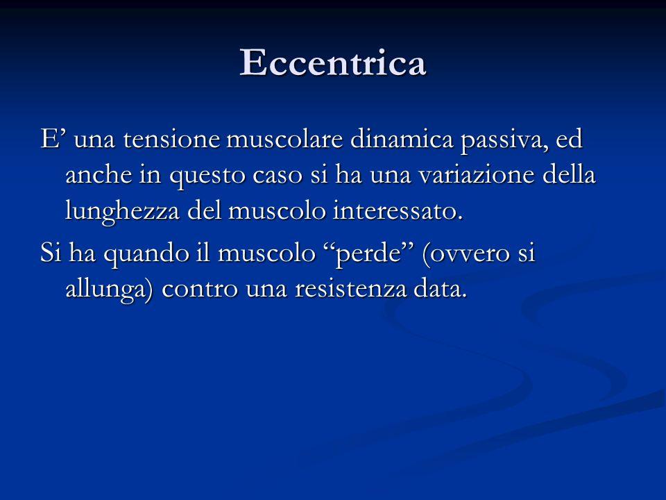 Eccentrica E' una tensione muscolare dinamica passiva, ed anche in questo caso si ha una variazione della lunghezza del muscolo interessato.