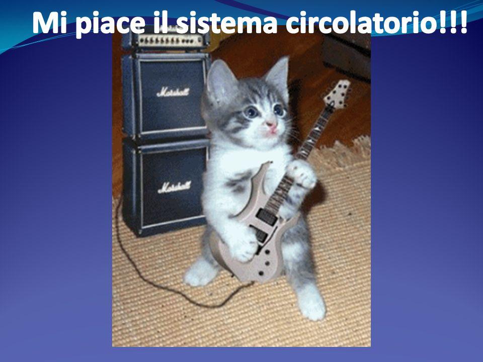 Mi piace il sistema circolatorio!!!