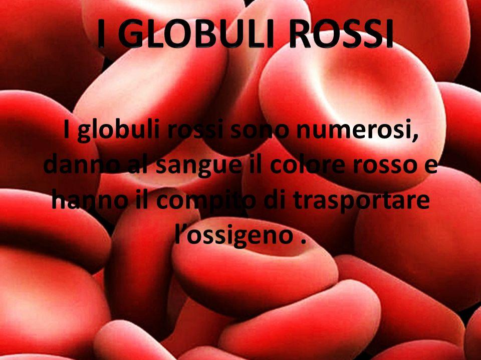 I GLOBULI ROSSI I globuli rossi sono numerosi, danno al sangue il colore rosso e hanno il compito di trasportare l'ossigeno .