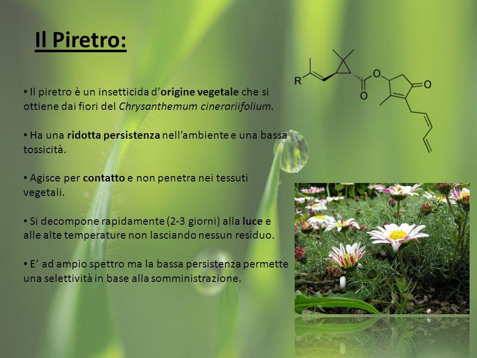 Il Piretro: Il piretro è un insetticida d'origine vegetale che si ottiene dai fiori del Chrysanthemum cinerariifolium.