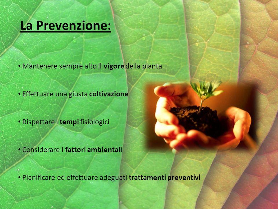 La Prevenzione: Mantenere sempre alto il vigore della pianta