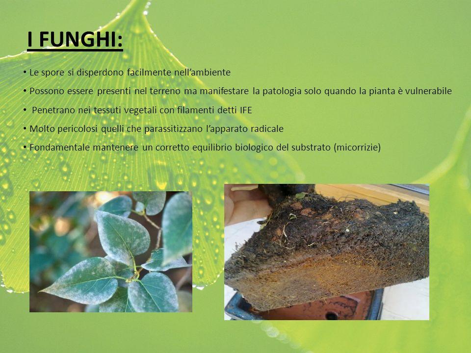 I FUNGHI: Le spore si disperdono facilmente nell'ambiente