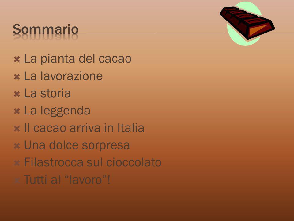 Sommario La pianta del cacao La lavorazione La storia La leggenda