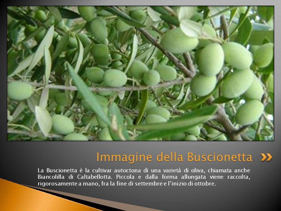 Immagine della Buscionetta