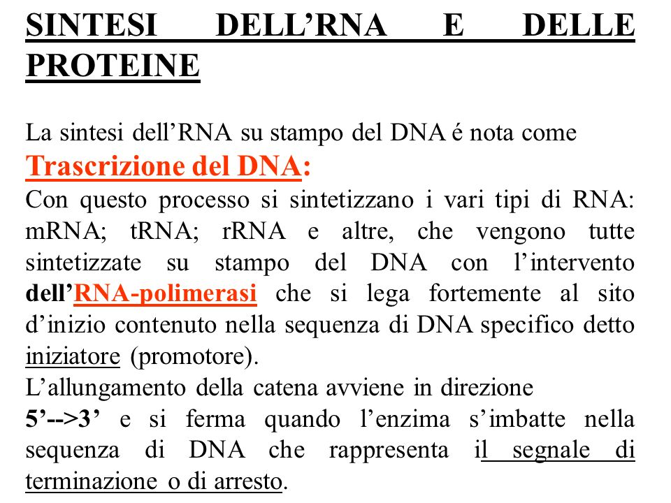SINTESI DELL'RNA E DELLE PROTEINE