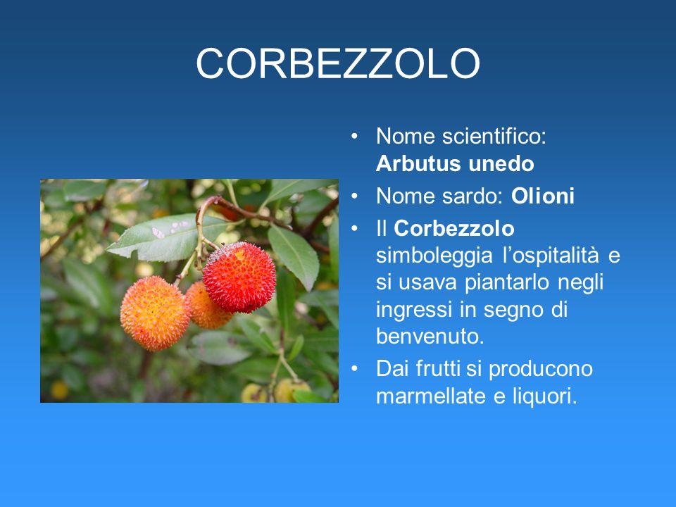 CORBEZZOLO Nome scientifico: Arbutus unedo Nome sardo: Olioni