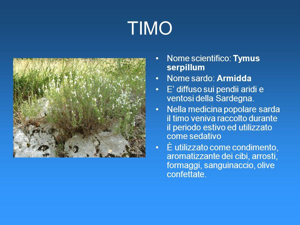 TIMO Nome scientifico: Tymus serpillum Nome sardo: Armidda