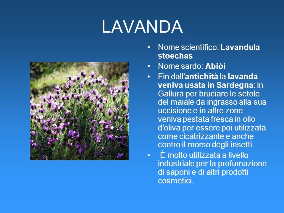 LAVANDA Nome scientifico: Lavandula stoechas Nome sardo: Abiòi