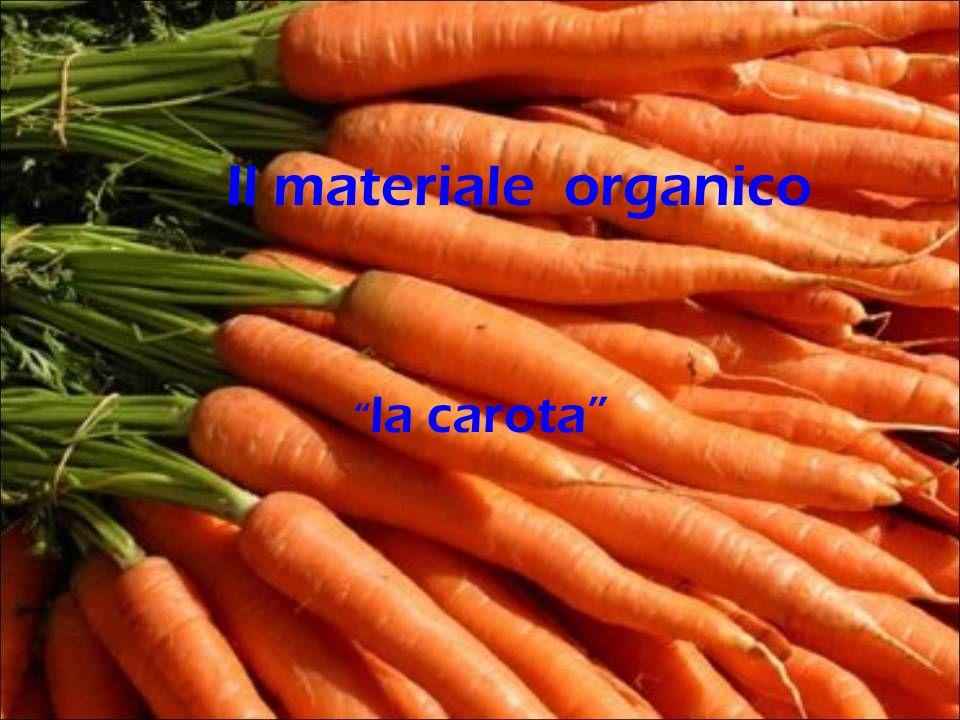 Il materiale organico la carota