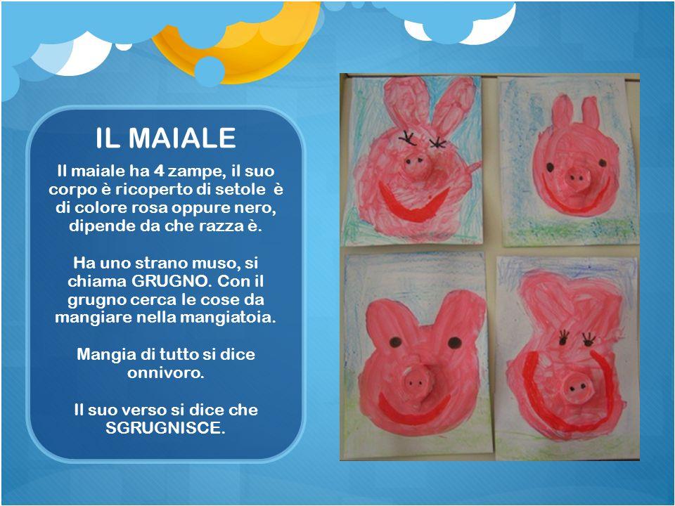 Il maiale ha 4 zampe, il suo corpo è ricoperto di setole è di colore rosa oppure nero, dipende da che razza è.