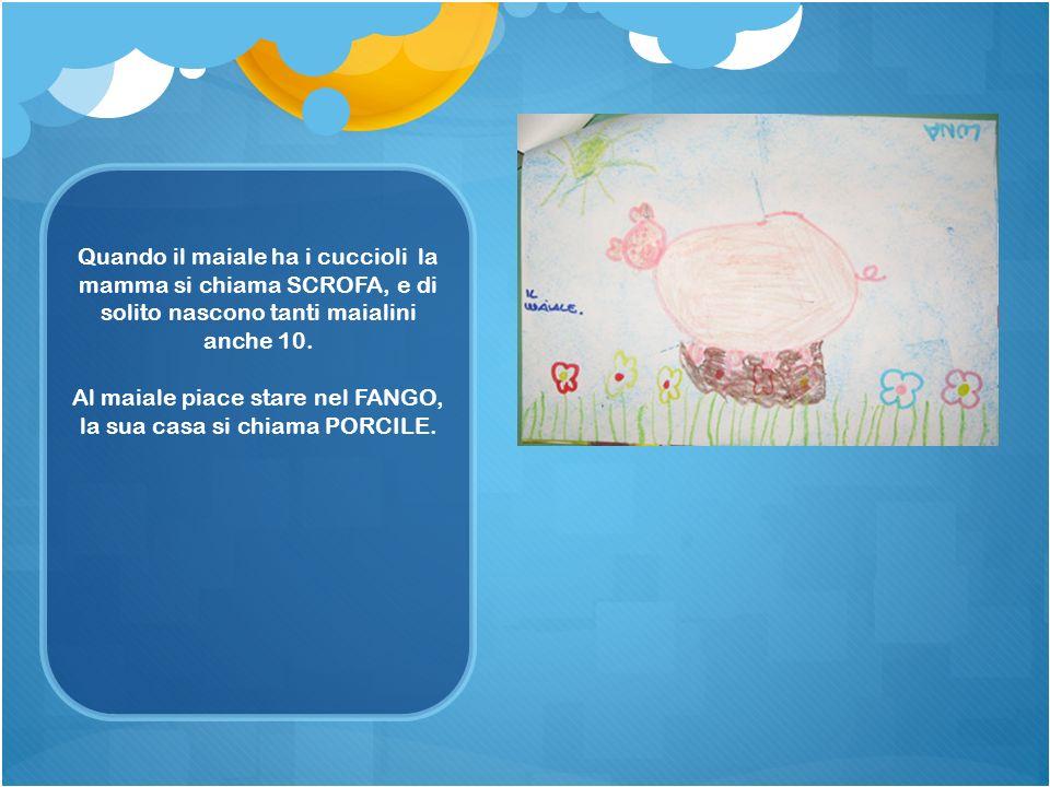 Al maiale piace stare nel FANGO, la sua casa si chiama PORCILE.