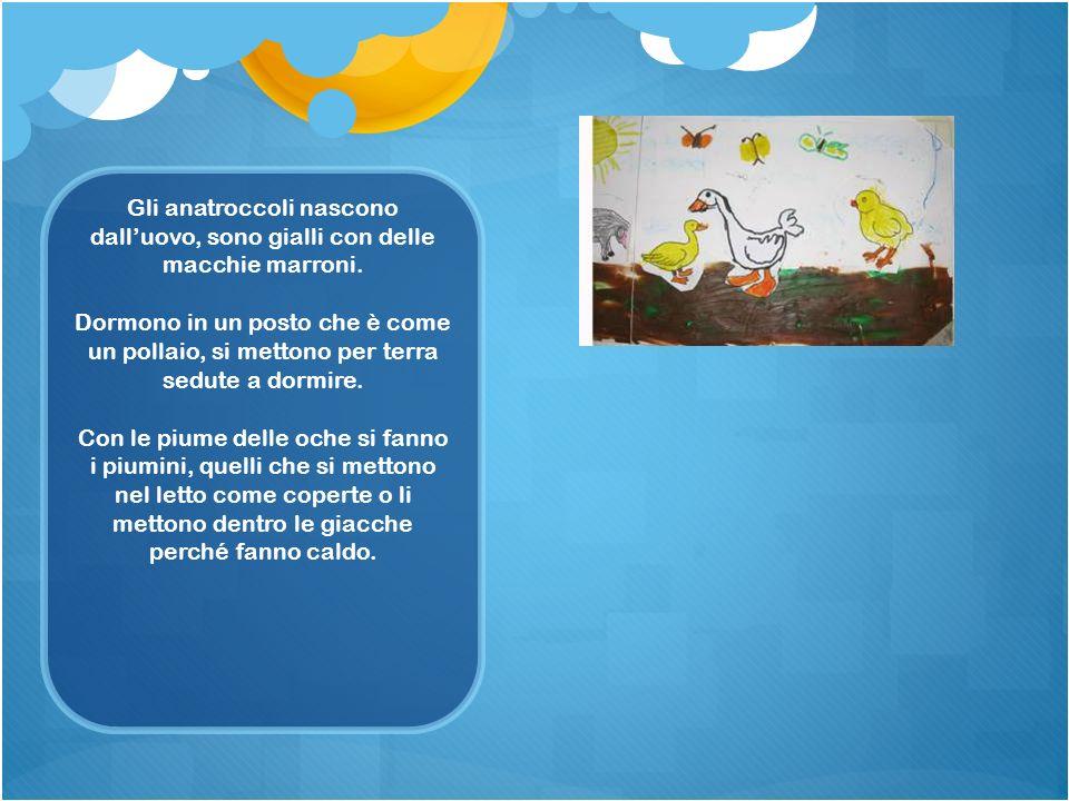 Gli anatroccoli nascono dall'uovo, sono gialli con delle macchie marroni.