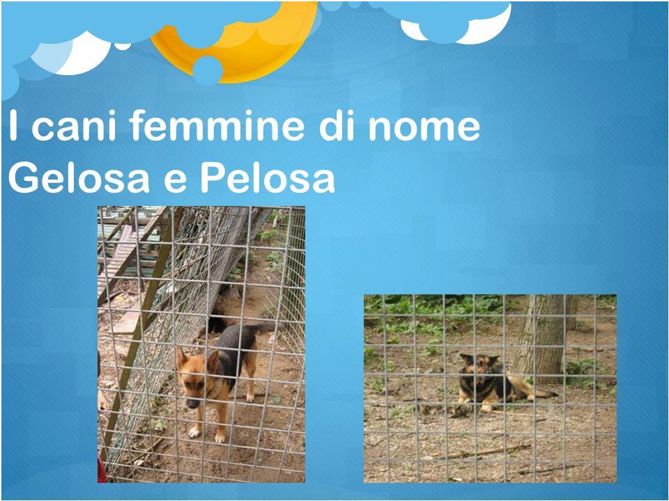 I cani femmine di nome Gelosa e Pelosa