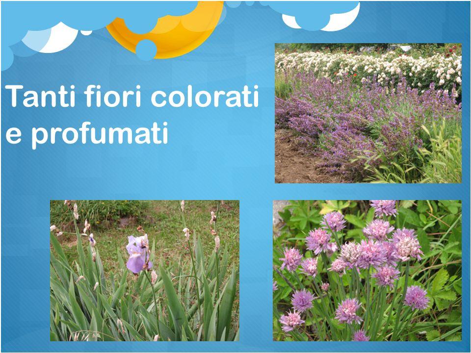 Tanti fiori colorati e profumati