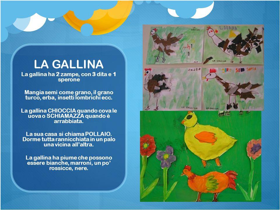 LA GALLINA La gallina ha 2 zampe, con 3 dita e 1 sperone