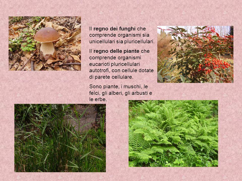 Il regno dei funghi che comprende organismi sia unicellulari sia pluricellulari.