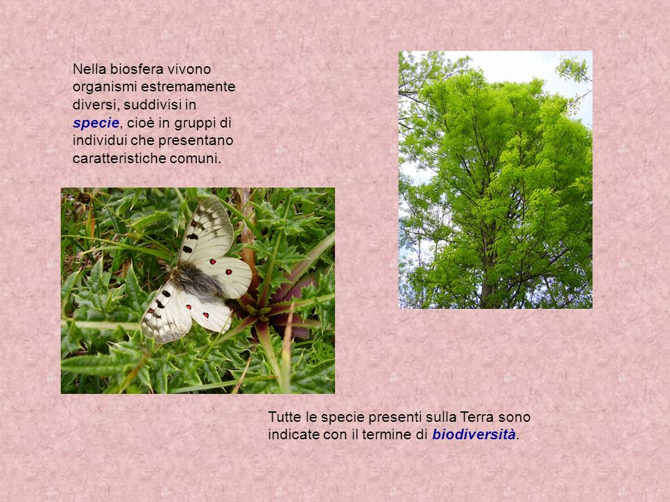 Nella biosfera vivono organismi estremamente diversi, suddivisi in specie, cioè in gruppi di individui che presentano caratteristiche comuni.