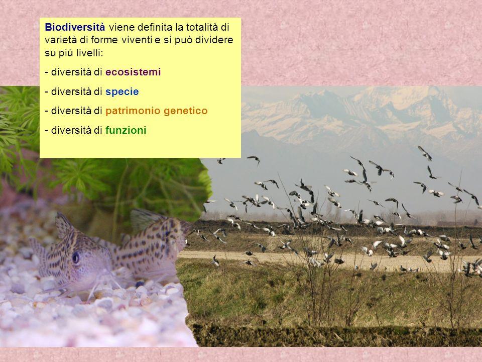 Biodiversità viene definita la totalità di varietà di forme viventi e si può dividere su più livelli: