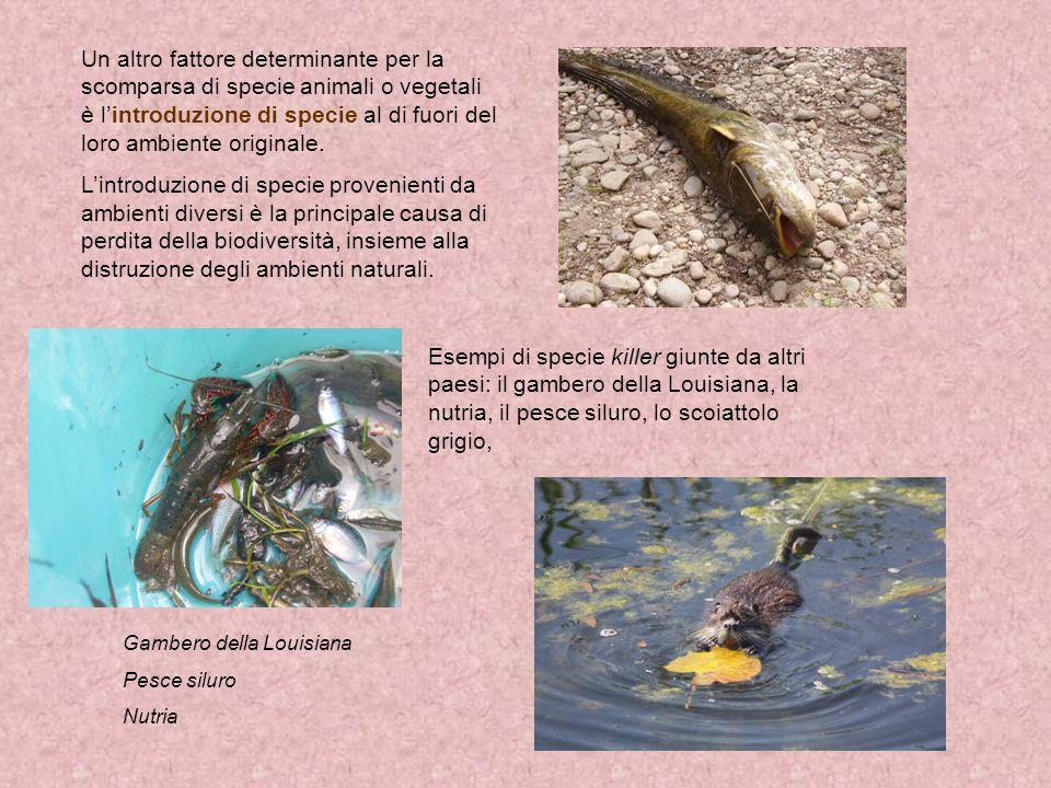 Un altro fattore determinante per la scomparsa di specie animali o vegetali è l'introduzione di specie al di fuori del loro ambiente originale.