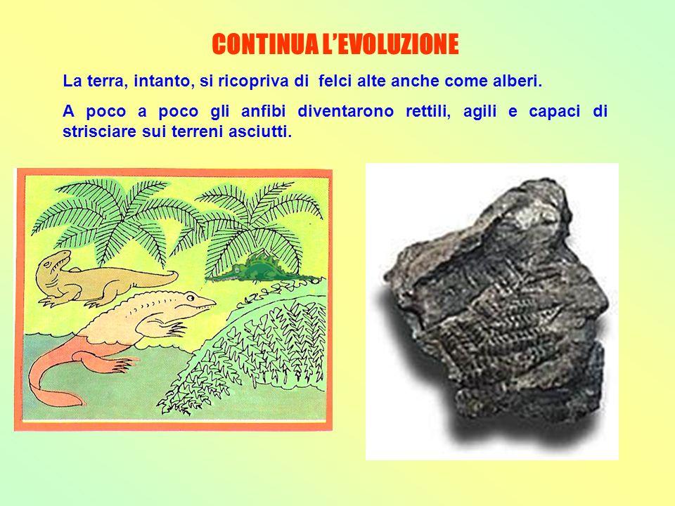 CONTINUA L'EVOLUZIONE