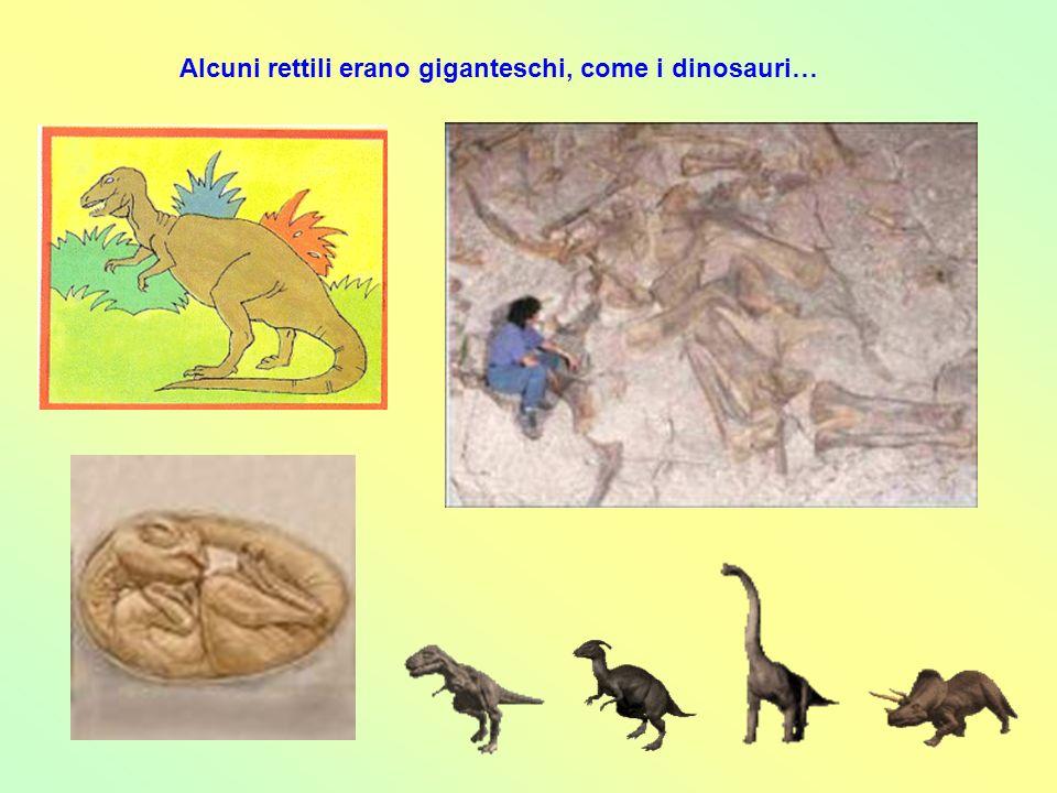Alcuni rettili erano giganteschi, come i dinosauri…