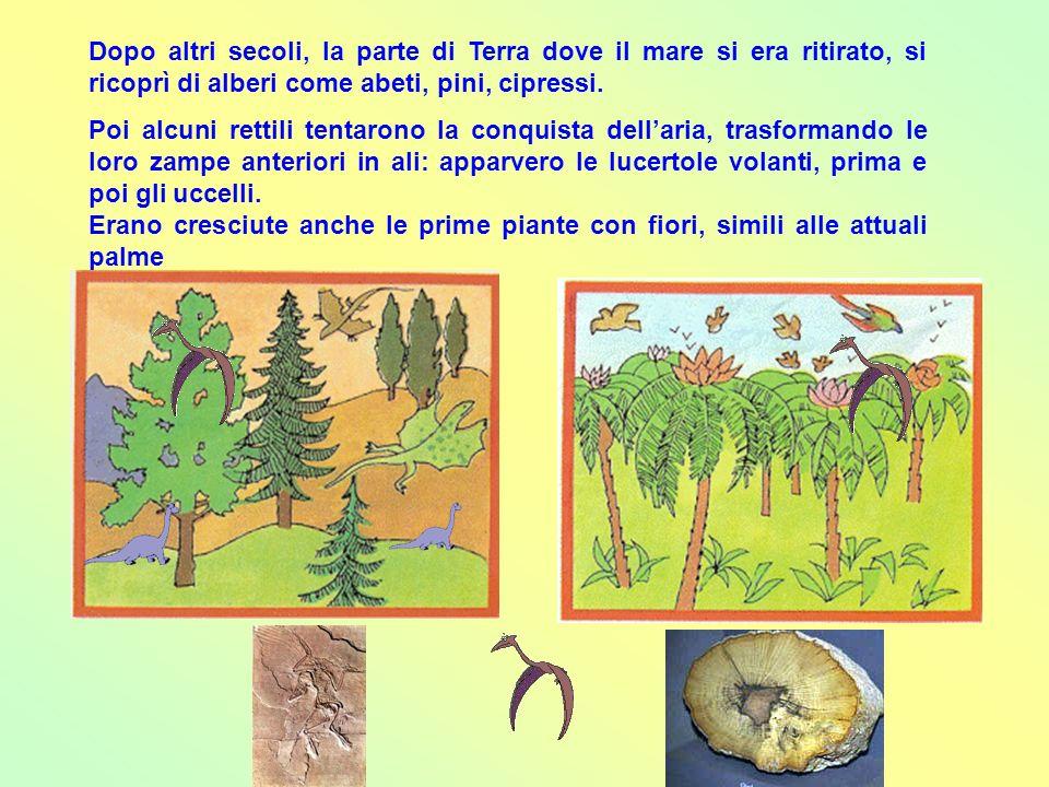 Dopo altri secoli, la parte di Terra dove il mare si era ritirato, si ricoprì di alberi come abeti, pini, cipressi.