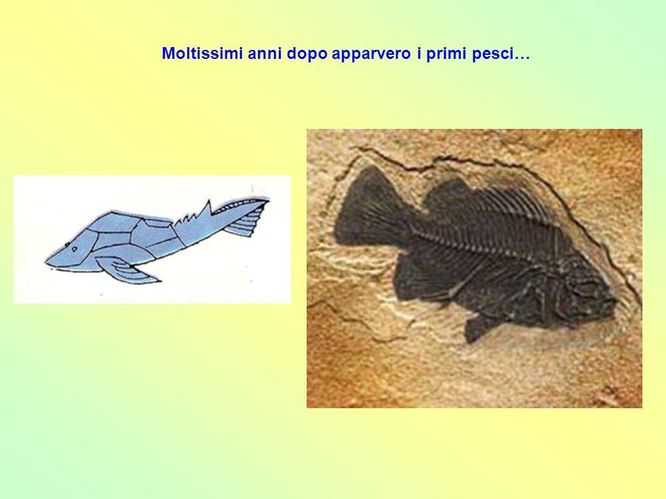 Moltissimi anni dopo apparvero i primi pesci…