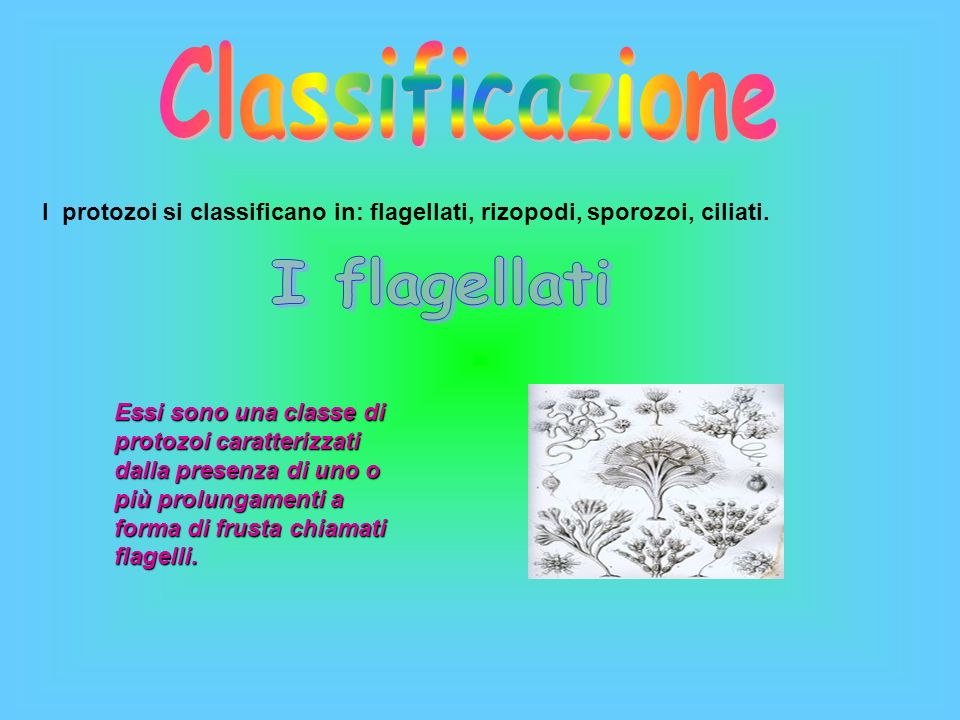 Classificazione I flagellati