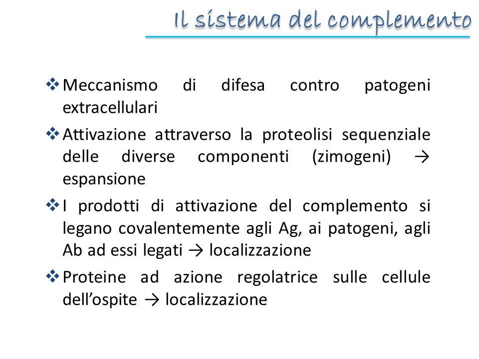 Il sistema del complemento