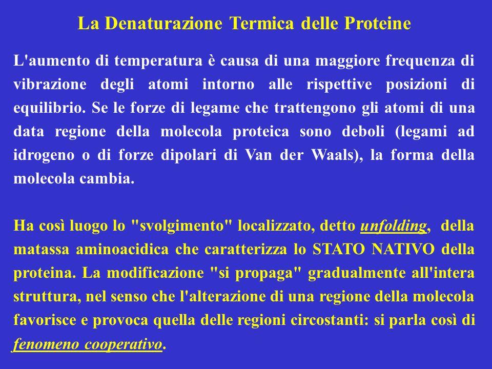 La Denaturazione Termica delle Proteine