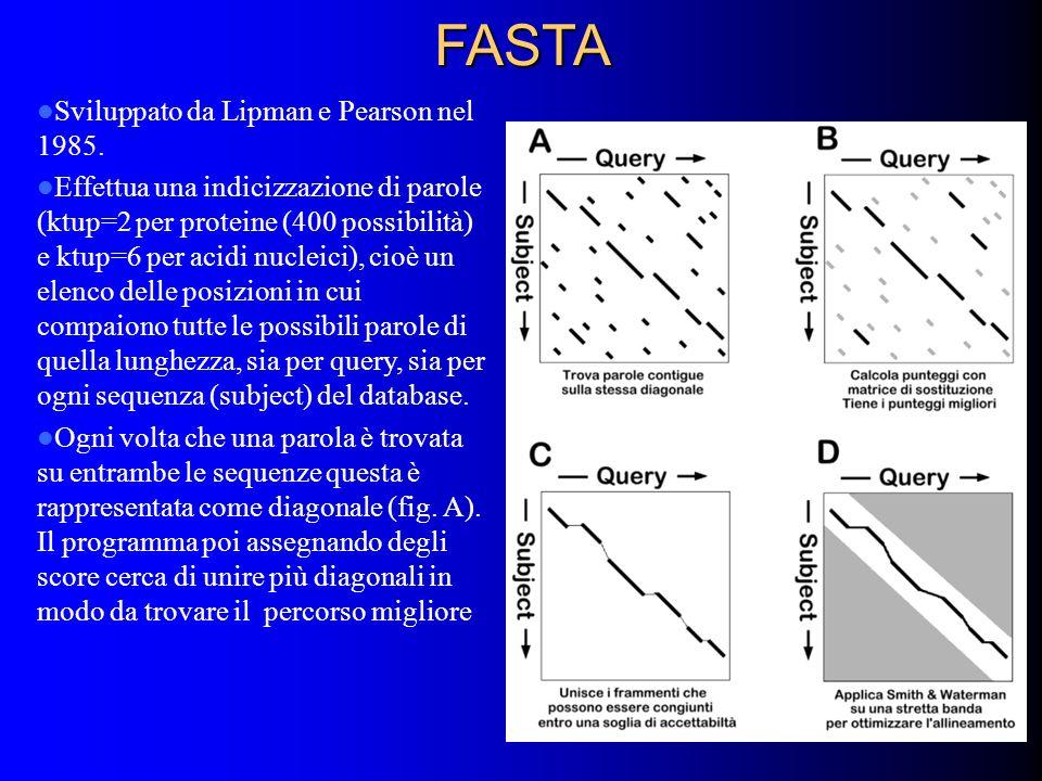 FASTA Sviluppato da Lipman e Pearson nel 1985.