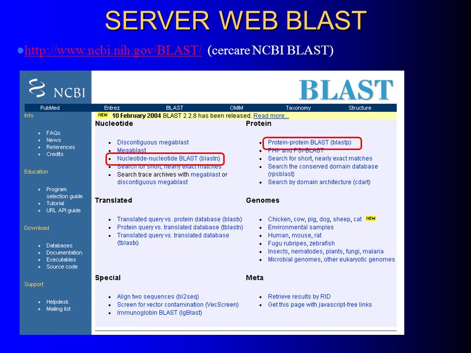 SERVER WEB BLAST http://www.ncbi.nih.gov/BLAST/ (cercare NCBI BLAST)