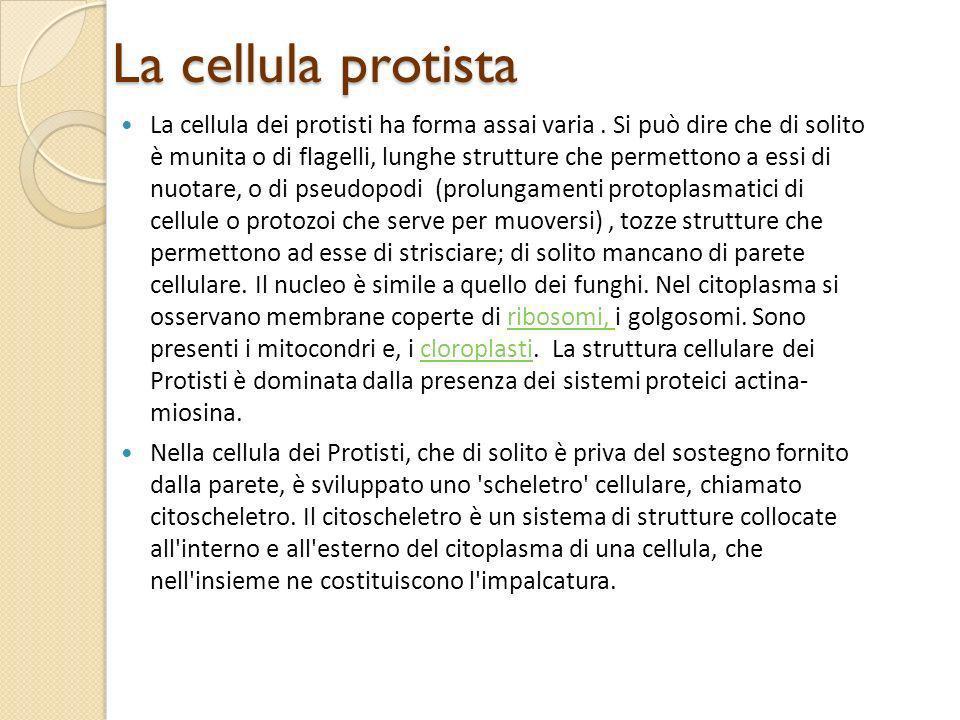 La cellula protista